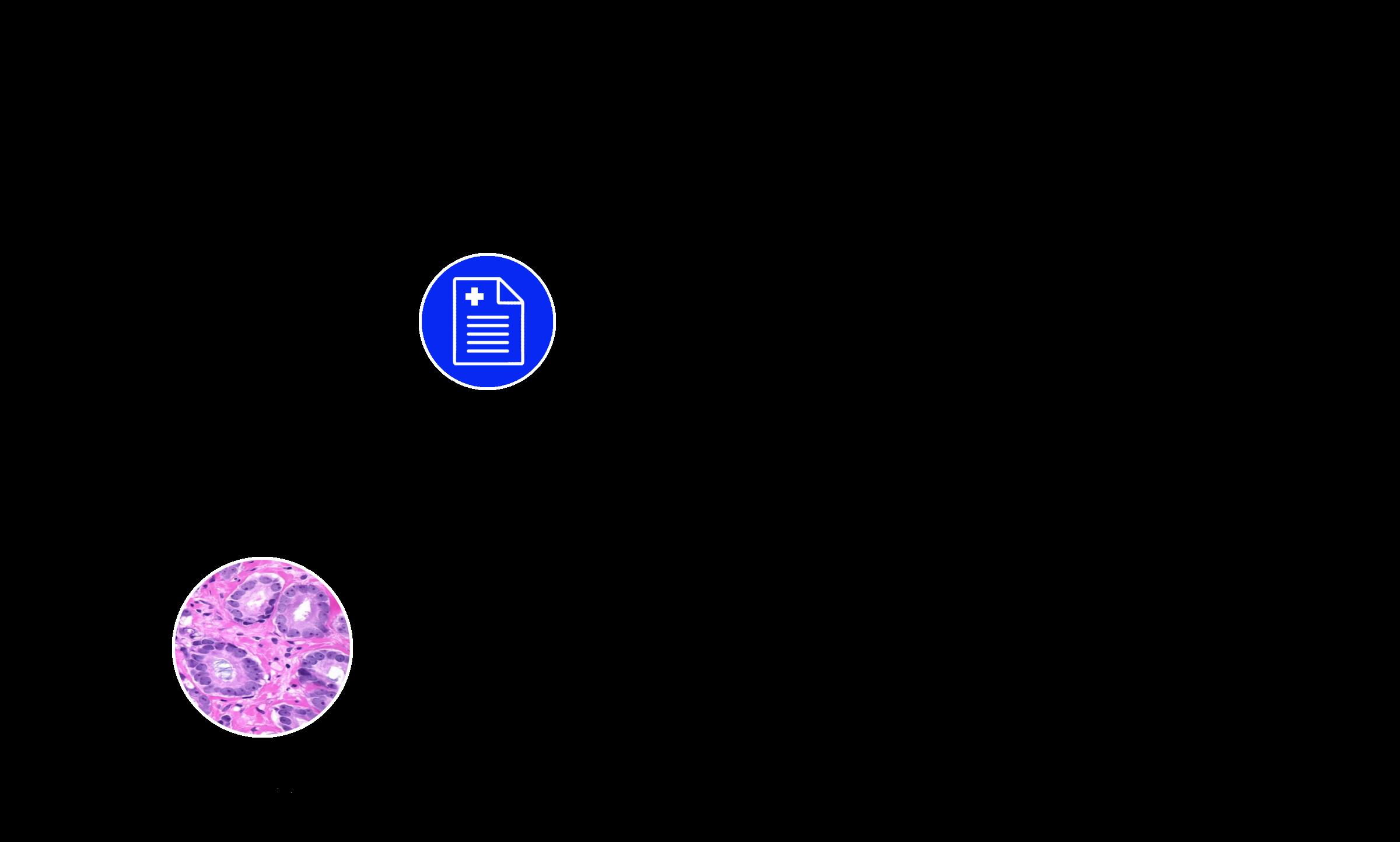 ExaMode logo